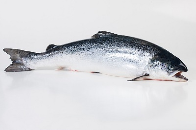 Whole Atlantic Salmon